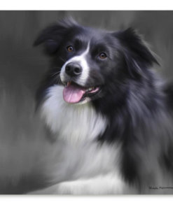 Resting Collie By Nigel Hemming
