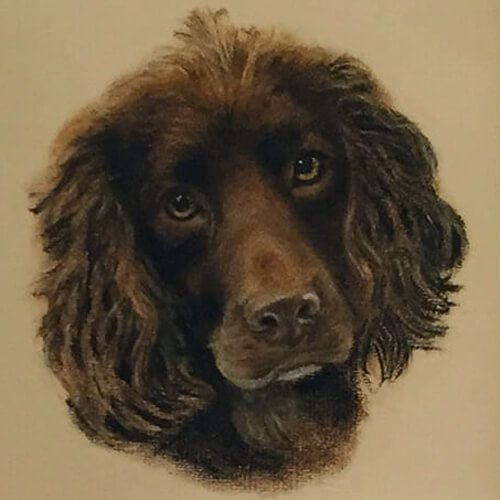 Cocker-spaniel-by-Evelyn-Christie