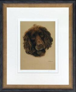 Cocker Spaniel Framed
