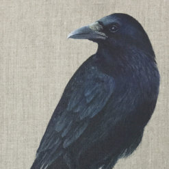 Crow by Helen Welsh_1