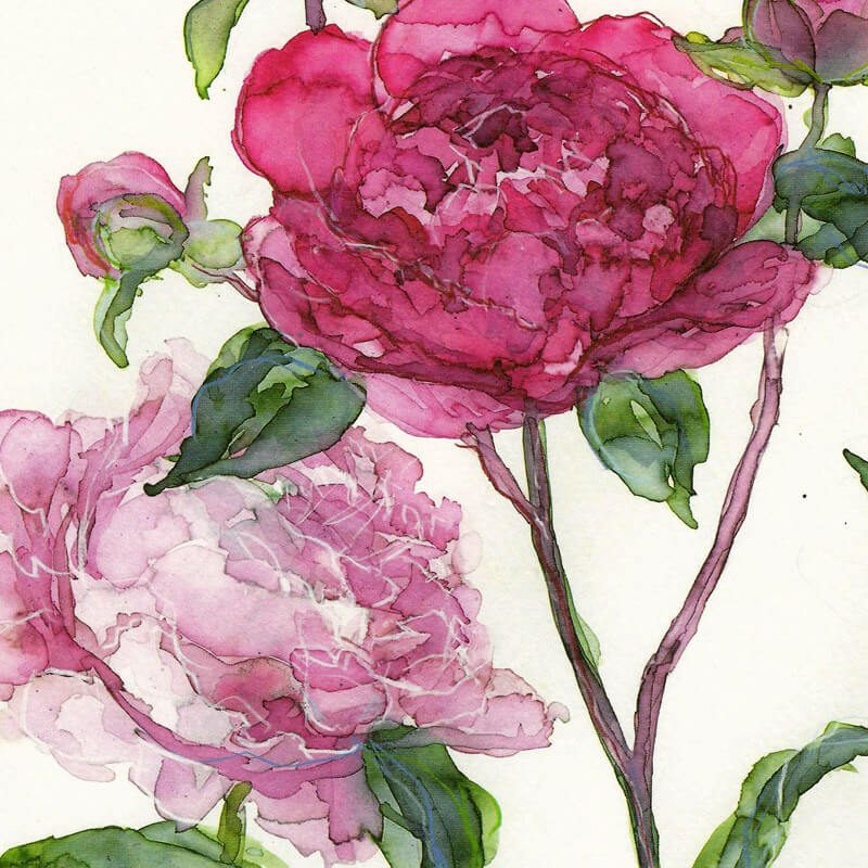 Floral greetings cards l gifts l the canvas art gallery pink peonies tt55 milkwood m4hsunfo