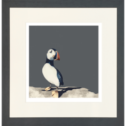 Puffin Portrait by Ron Lawson