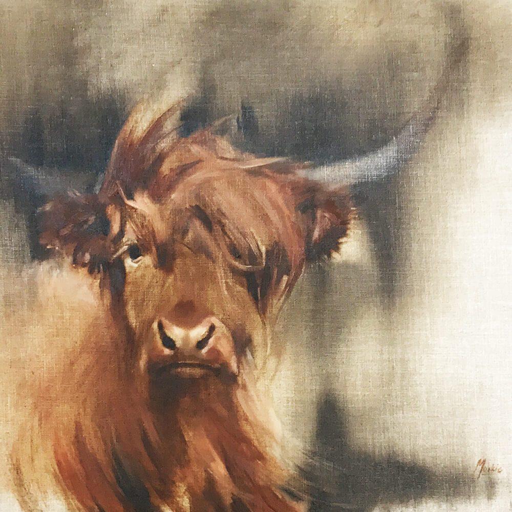 Highland Cow thumbnail