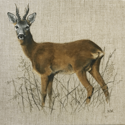 Curious Roe Buck by Helen Welsh