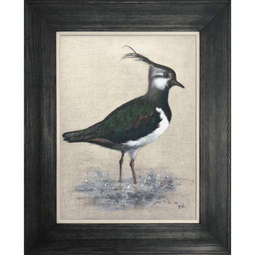 Lapwing in water by Helen Welsh copy