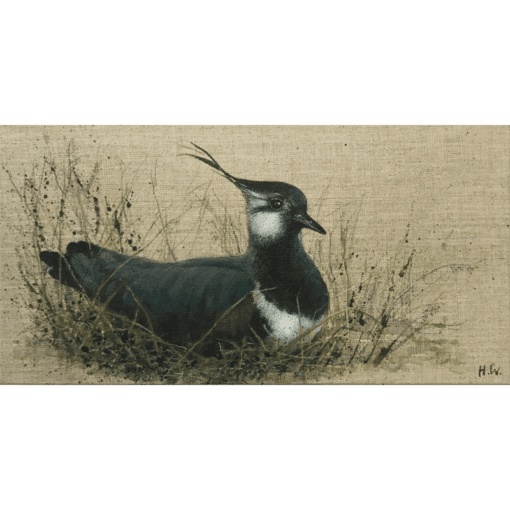 Resting Lapwing by Helen Welsh