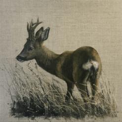 Roe Buck Rear View by Helen Welsh
