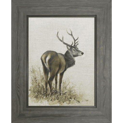 Red Deer Stag by Helen Welsh