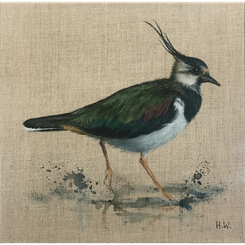 Paddling Peewit by Helen Welsh