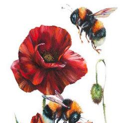 simply red by Georgina McMaster